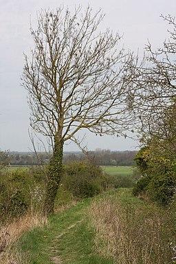 Fleam Dyke, near Fulbourn - geograph.org.uk - 1259202
