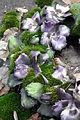 Fleurs de cimetière 29 01 2011 C 13.jpg