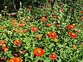 Flora Cultivo - panoramio.jpg