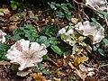Floral fungus (10493575665).jpg