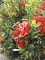 Flower2image.jpg