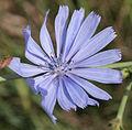 Flower 10.jpg