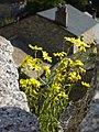 Flowers, Carol (1071685890).jpg