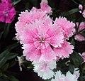Flowers - Uncategorised Garden plants 03.JPG