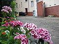 Flowers of Wilda Poznan.jpg