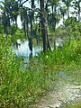 Fontainebleau State Park scene May 2011.jpg