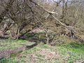 Footbridge with Fallen Tree - geograph.org.uk - 754700.jpg
