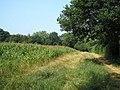 Footpath alongside a field of maize, Surrey - geograph.org.uk - 210164.jpg