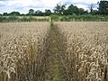 Footpath from Swerford - geograph.org.uk - 215446.jpg
