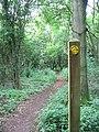 Footpath through woodland near Shortwood Lodge - geograph.org.uk - 190834.jpg