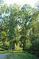 Forêt de Stambruges 23.jpg