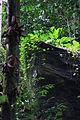 Forêts rocheuses de Tayap.jpg