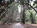 Forest in Miyazaki Shrine 4.jpg