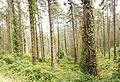 Forest near Bermeo 5.jpg