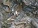 Formazione del Argille e calcari di Canetolo1.jpg