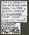 Formica puberula casent0005396 label 1.jpg