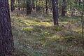 Forst Rundshorn IMG 1735.jpg