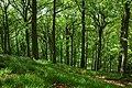 Fownhope Park Wood - geograph.org.uk - 1310197.jpg