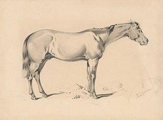 Study of a Horse I.
