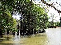 Frio river, Costa Rica-2.jpg