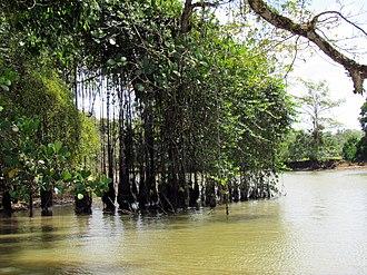 Los Chiles (canton) - Image: Frio river, Costa Rica 2
