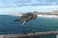 Ft Walton Pier Heron.jpg