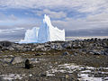 Fur seal on Bonaparte Point with an iceberg in the background..jpg