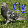 Güvercin için G.jpg