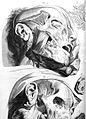 G. Bidloo, Anatomia humani corporis... Wellcome L0022997.jpg