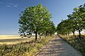 Gallecs - panoramio (3).jpg