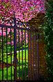 Garden (5626286427).jpg