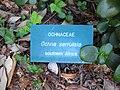 Gardenology.org-IMG 2365 ucla09.jpg