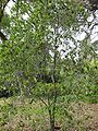 Gardenology.org-IMG 4959 hunt0904.jpg