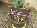 Gardenology.org-IMG 7704 qsbg11mar.jpg