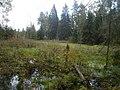 Garkalnes novads, Latvia - panoramio - BirdsEyeLV (2).jpg