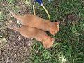 Gatos!.jpg