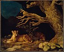 George Stubbs - Lion and Lioness - 49.6 - Museum of Fine Arts.jpg