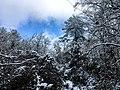 Georgia snow IMG 4712 (25075950618).jpg