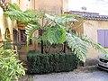 Giant fern.jpg