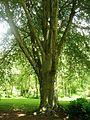 Giardino di Ninfa 19.jpg