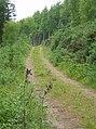 Glenshalloch Wood - geograph.org.uk - 472223.jpg