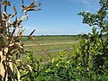 Glimpse through a window in a hedgerow - geograph.org.uk - 1337013.jpg