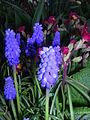 Gnome flowers (VG 01).jpg