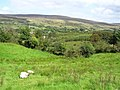 Gortinar Townland - geograph.org.uk - 1482760.jpg