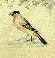 Grandes Heures du duc de Berry (BNF latin919) - Folio 8 Oiseau-8.jpg