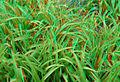 Grass anaglyph.jpg