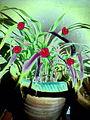 Grass in the garden, Hibiscus flowers added ;-).jpg