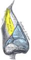 Gray852 - Frontal process of maxilla.png