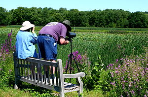 Great Meadows National Wildlife Refuge - Bird watchers in Great Meadows National Wildlife Refuge