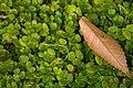 Green Carpet (253517523).jpeg